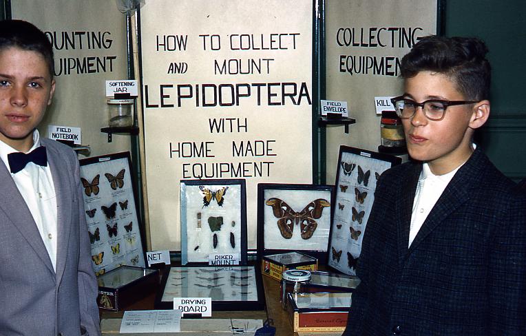 Vintage_Lepidoptera.jpg