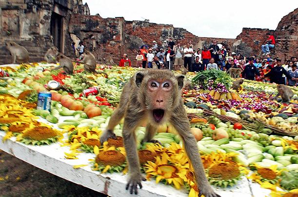 http://blogfiles.wfmu.org/KF/2012/08/08/monkey_fest.jpg